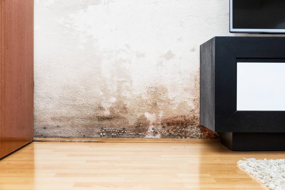 Cuidado con la humedad en el hogar. Puede ser peligrosa