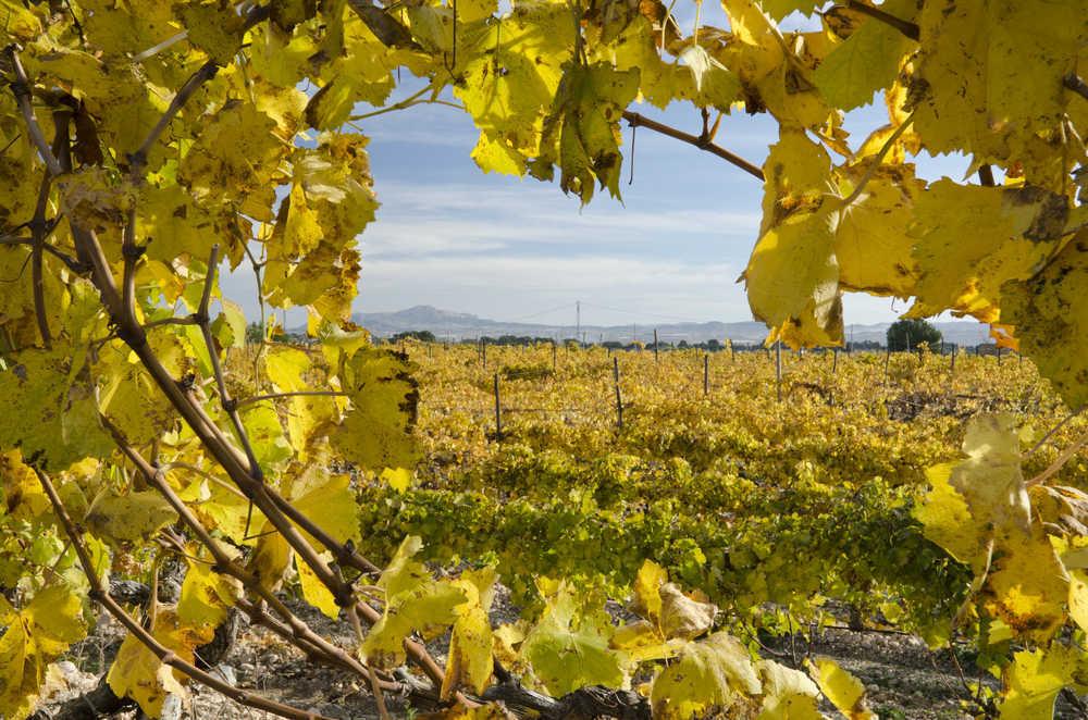 La industria vitivinícola en Alicante